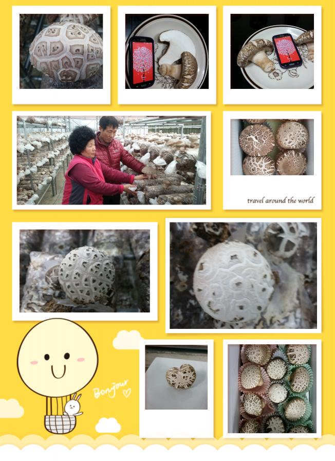 마송버섯 초기재배기